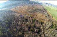 Feuchtwiesen und Biotoppflege